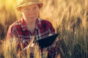 woman using a tablet in a grain field